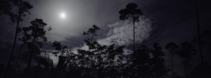January Everglades Full Moon, 2009