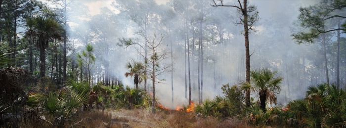 Fire in the Pines, Big Cypress #2, 2010