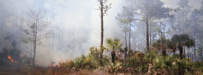 Fire in the Pines, Big Cypress #3, 2010