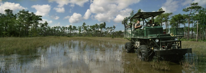Swamp Buggy, 2008