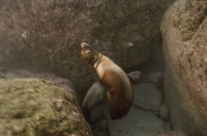 Spinning Sea Lion, 2005
