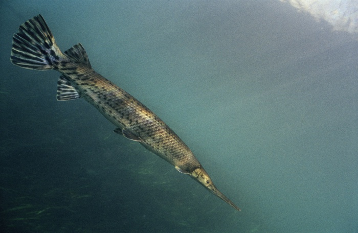 Golden Gar, 2005